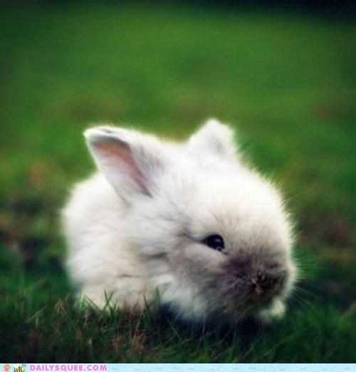 big,Bunday,bunny,celebrating,celebration,Hall of Fame,happy,happy bunday,itty bitty,pint-sized,rabbit,tiny