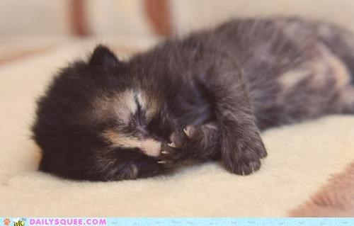 adorable cat dreaming kitten logical lolwut necessary philosophy sleeping squee sufficient sweet syllogism - 4994772736