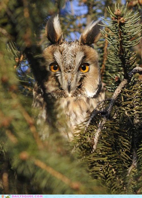 caveat impolite Okay Owl stare Staring - 4994780416