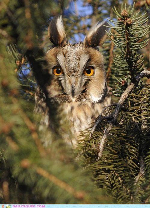 caveat impolite Okay Owl stare Staring - 4994780416