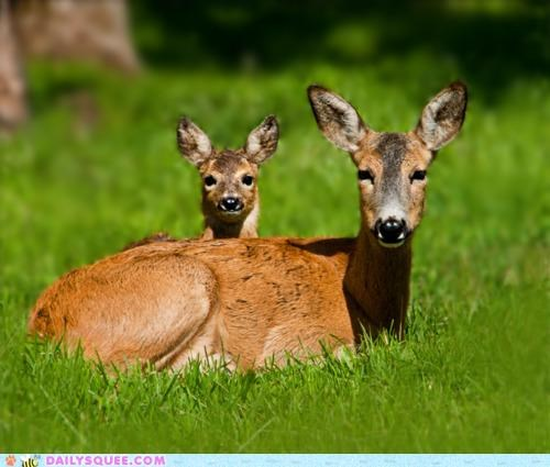 baby,biology,deer,family,genetic,innate,mother,predisposition,pun,squee,trait