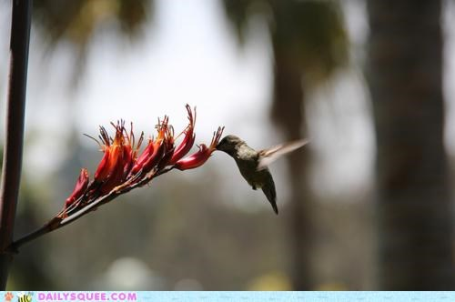 beautiful bird breathtaking feeding hummingbird noms phenomenon - 4994821120