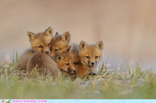fox,foxes,idiom,kit,kits,redundancy,the whole kit and caboodle