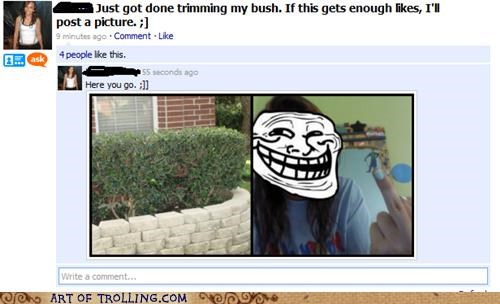 bait and switch bush facebook likes that sounds naughty trimming - 4994876416