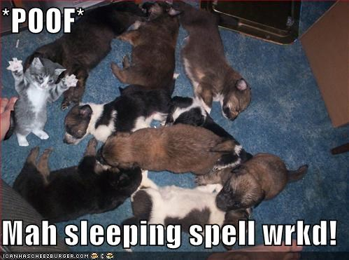 kitten,lolcats,loldogs,lolkittehs,lolpuppies,sleeping,spells