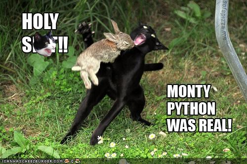 attack best of the week bunnies caption captioned Hall of Fame Interspecies Love monty python movie reference rabbits the rabbit of caerbannog - 4995136768