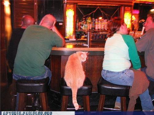 bar cat crunk critters - 4995320832