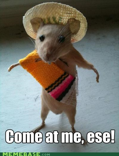 bro,cute,essay,Memes,mouse,spanish,speedy gonzales