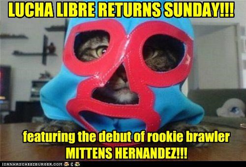 caption captioned cat Cats costume Lucha Libre rookie wrestling