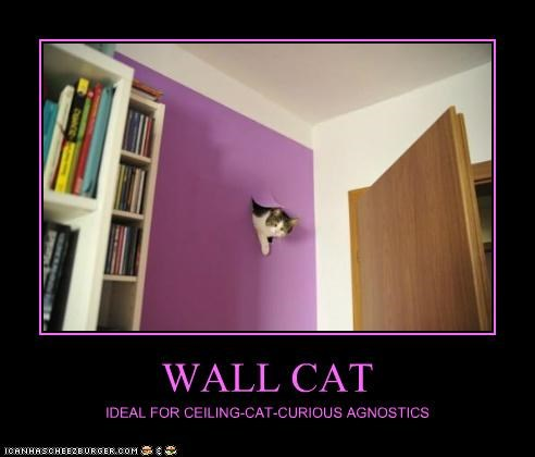 caption captioned cat Cats ceiling cat get out of there cat purple religion Wall Cat walls wtf - 4996326400
