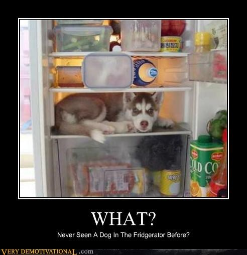 animals dogs food fridge hilarious wtf