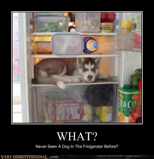 animals dogs food fridge hilarious wtf - 4997204736