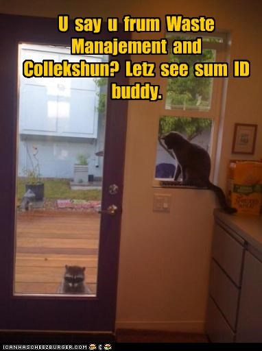 caption,captioned,cat,Cats,door,garbage,identification,raccoons,waste management