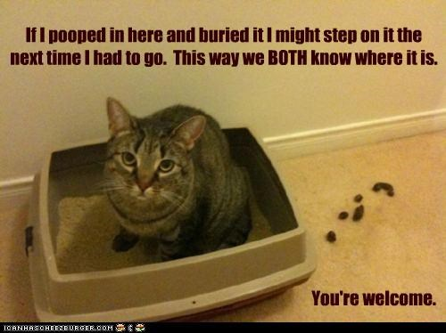 caption,captioned,cat,Cats,FAIL,floor,litter box,poop,toilet humor