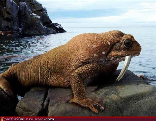 animals,lizard,walrus,wtf