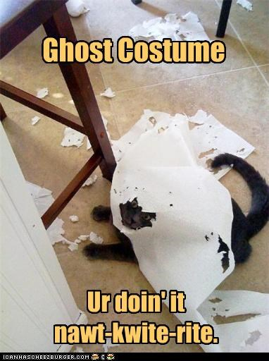 caption,captioned,cat,Cats,costume,destruction,ghosts,mess,paper towels,shredded