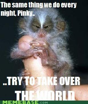 animals animemes brain Memes monkey pinky television - 4997932544