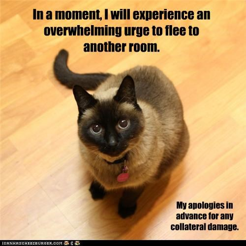 apologies,behavior,best of the week,caption,captioned,cat,Cats,damage,flee,Hall of Fame,run