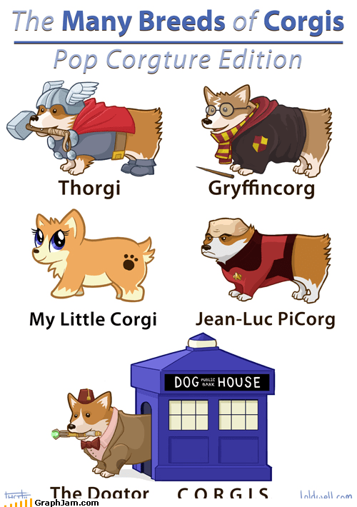 corgi,cute,doctor who,Harry Potter,my little pony,pop culture,Star Trek,Thor