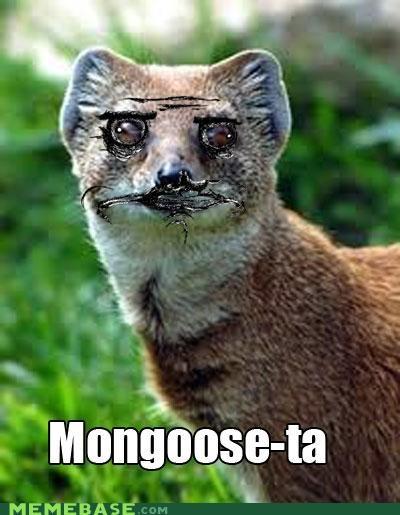 animals animemes me gusta mongoose - 4998165248