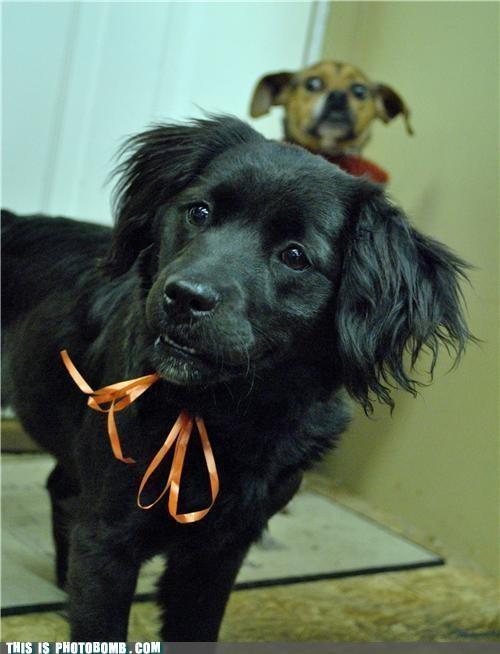 alarm Animal Bomb dogs horror shock that face - 4998292736