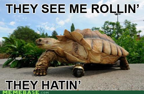 animals animemes bro caster hating Memes rolling turtle - 4998614016