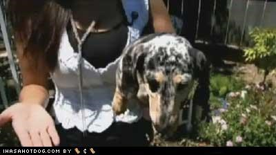 Chelse dachshund Feel Good Story rescue saved owners life - 4998852096