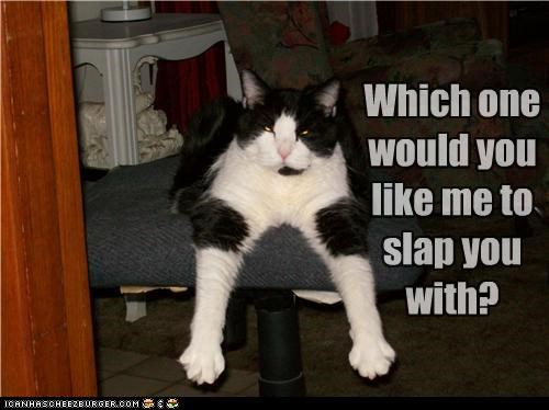 arms caption captioned cat Cats choice decision grumpy mean paws slap which one - 4999036160