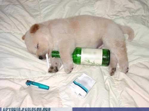 crunk critters,passed out,puppy,young