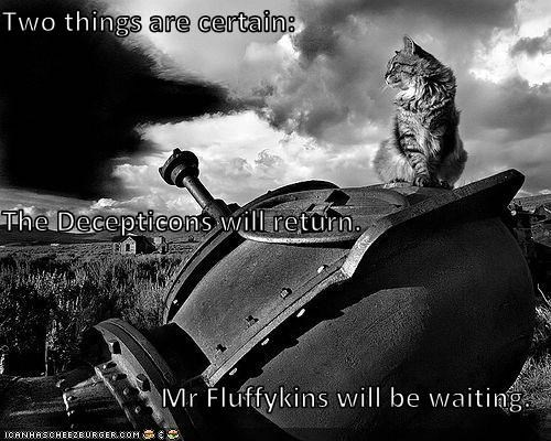 black and white captioned cat Cats Decepticons farms movie reference rural silly names transformers waiting - 5000394240