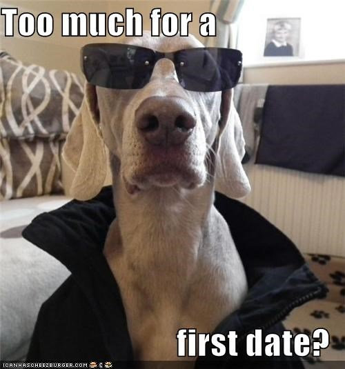 clothing first date sunglasses too much weimaraner