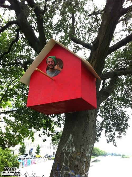 bird house building treehouse trees