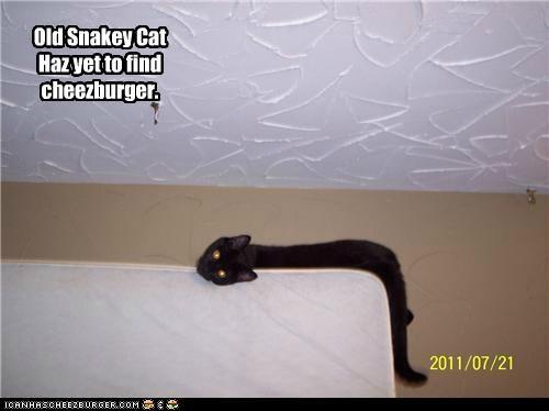 Cheezburger Image 5001792512