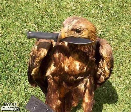 bird hawk knife mother nature ftw - 5001942272