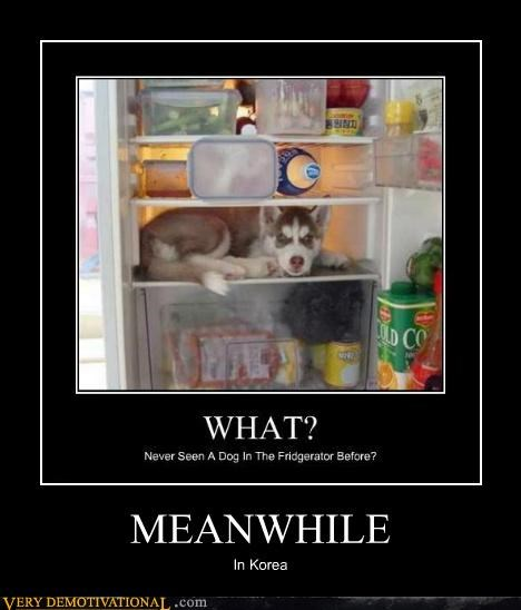 dogs fridge hilarious korea Meanwhile