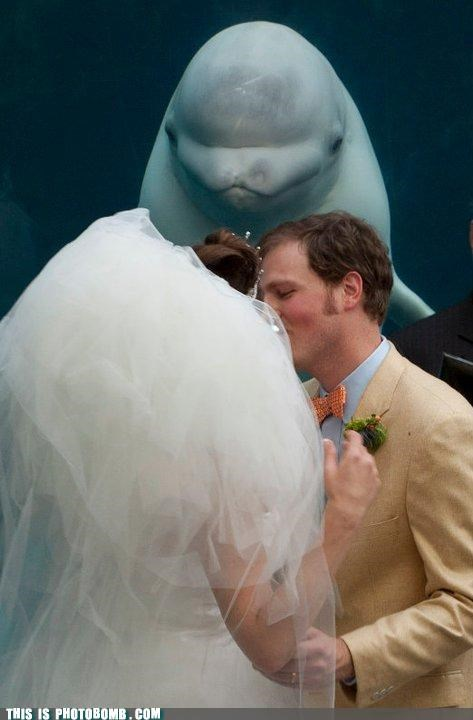 Animal Bomb aquarium beluga KISS mariachi wedding whale