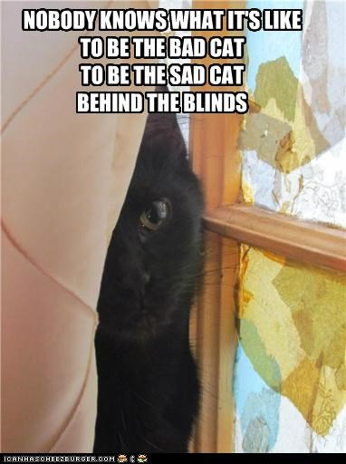 NOBODY KNOWS WHAT IT'S LIKE TO BE THE BAD CAT TO BE THE SAD CAT BEHIND THE BLINDS