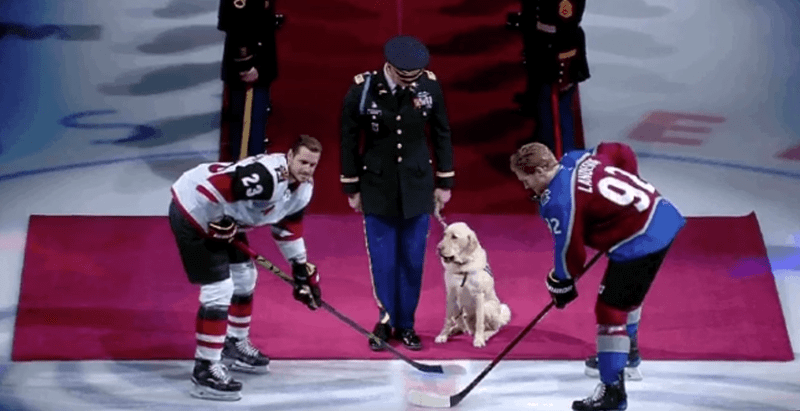 Adorable dog drops the first puck at hockey game