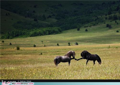 brohoof field horse IRL stallion wild - 5005915904