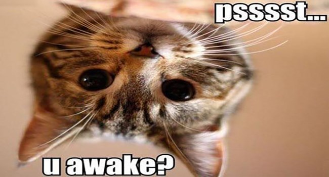 cats waking up funny cat memes - 5007365