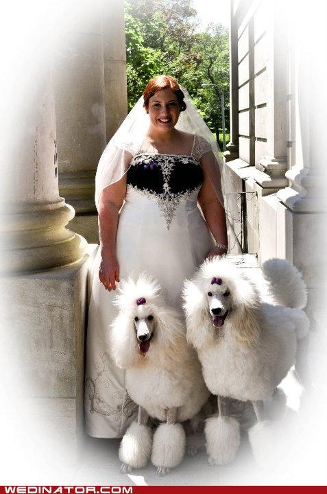 bride,bridesmaids,dogs,funny wedding photos