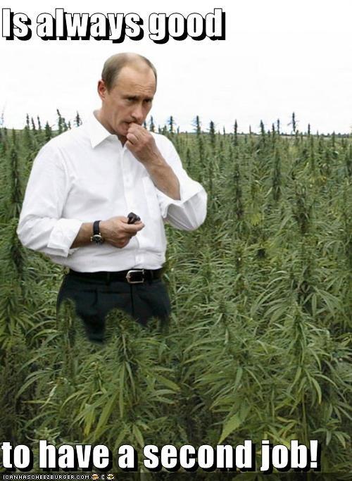 marijuana political pictures Vladimir Putin - 5008946432