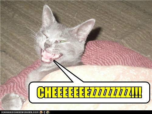 Cheezburger Image 5010591488