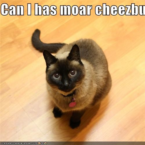 Cheezburger Image 5011061504