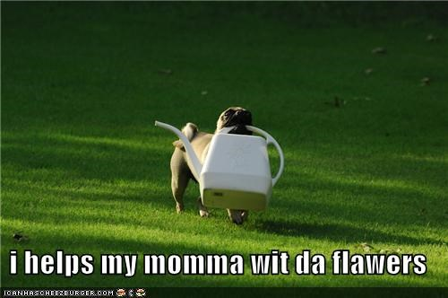 gardening,happy dog,helping,helping momma,mommys-little-helper,outdoors,pug,watering can