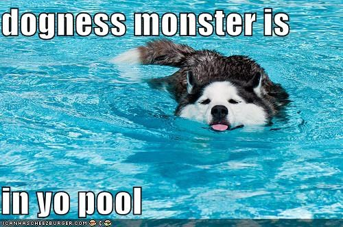 cooling down dogness monster happy dog having fun mistaken identity pool summer summertime swimming - 5012029696