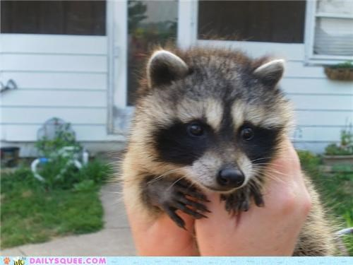 abandoned baby found heartwarming raccoon reader squees rescue rescued touching - 5012349696