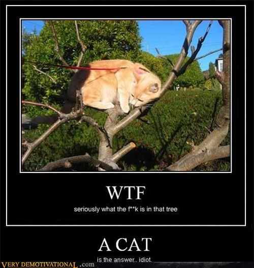cat hilarious tree wtf - 5012638208