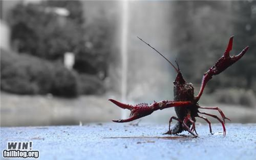 crawfish,happy,mother nature ftw,rapturous animals
