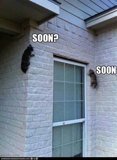 attack,caption,captioned,cat,Cats,climbing,ready,SOON,waiting,wall,window